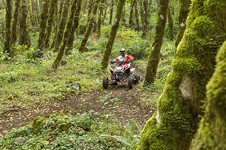A power sport enthusiast riding an ATV through a forested trail