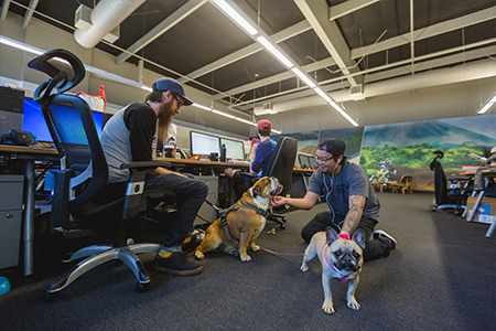 MotoSport employees enjoying some office time with their dogs